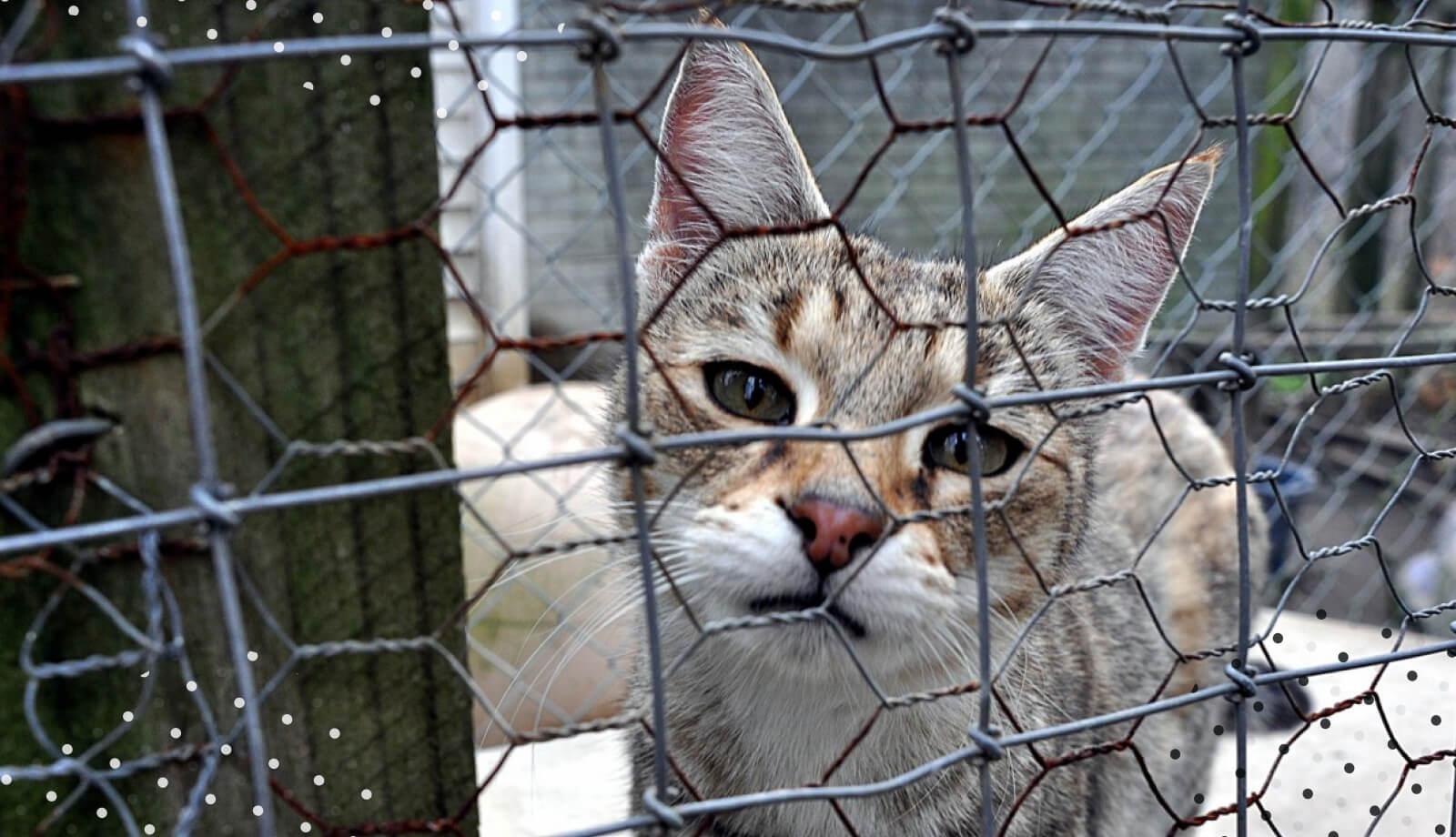 Посилення відповідальності за жорстоке поводження з тваринами